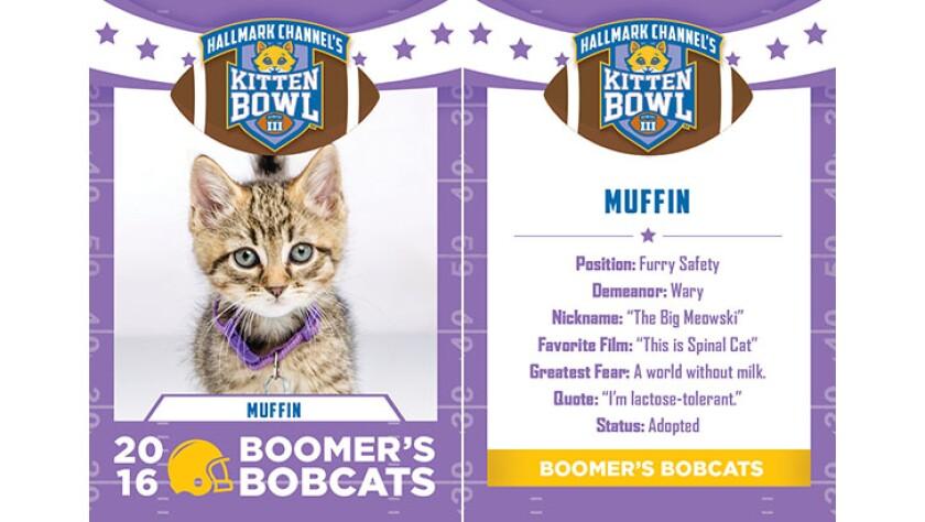 Muffin-bobcats-KBIII.jpg