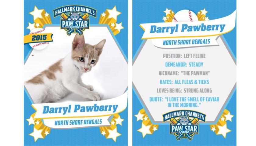 paw-star-darryl-pawberry-2015