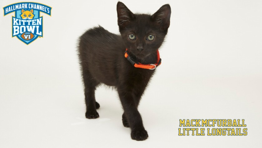 LL-Mack_McFurball-meet-the-kittens-KBV.jpg