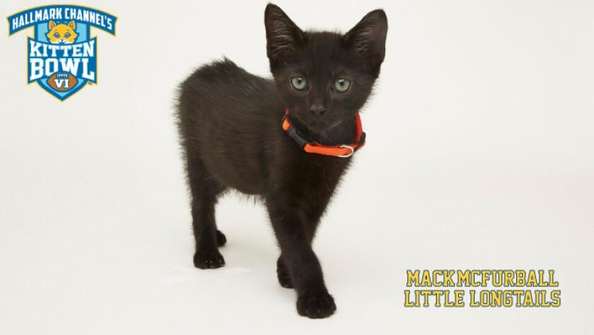 LL-Mack_McFurball-meet-the-kittens-KBV.jpg