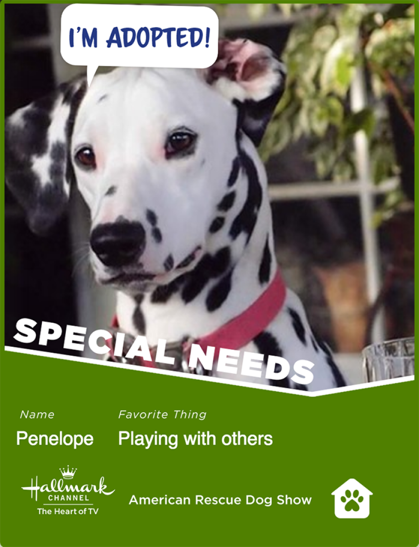 Penelope-specialneeds.png
