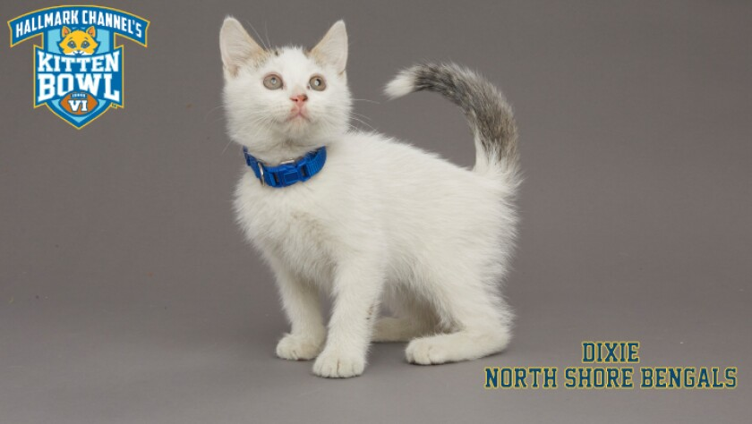 NB-Dixie-meet-the-kittens-KBV_tmp653377265.jpg