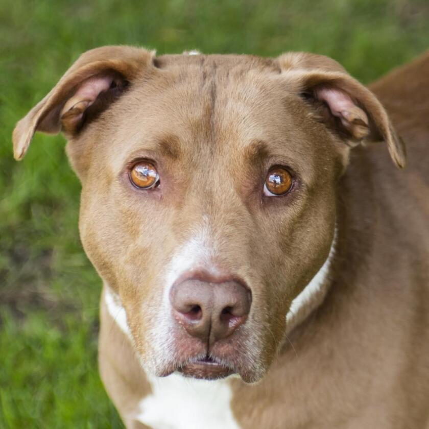 9055_Pet_Adoption_Prudence.png