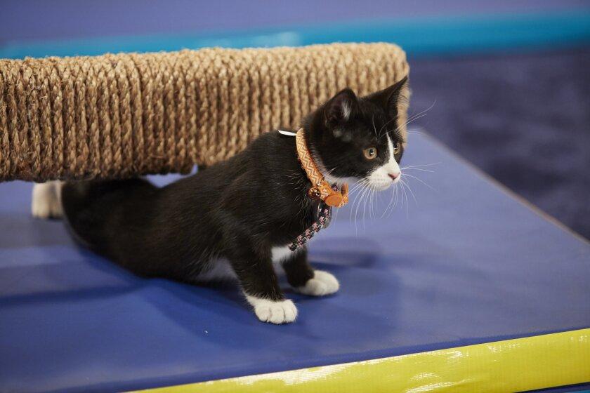 KittenSummerGames_0091.jpg