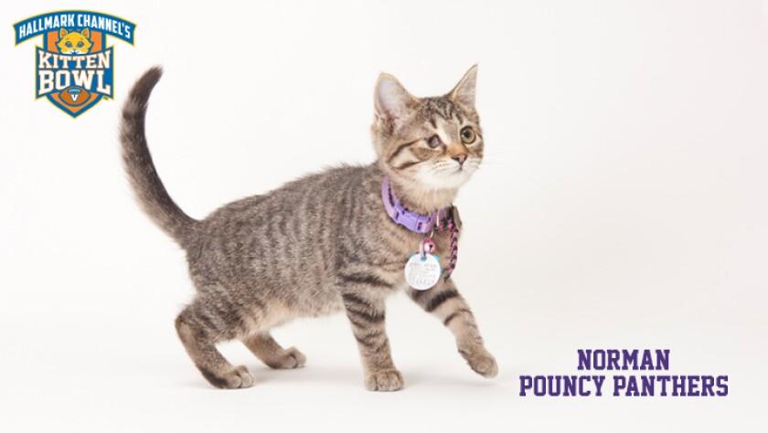 meet-the-kittens-KBV-PP-Norman.jpg