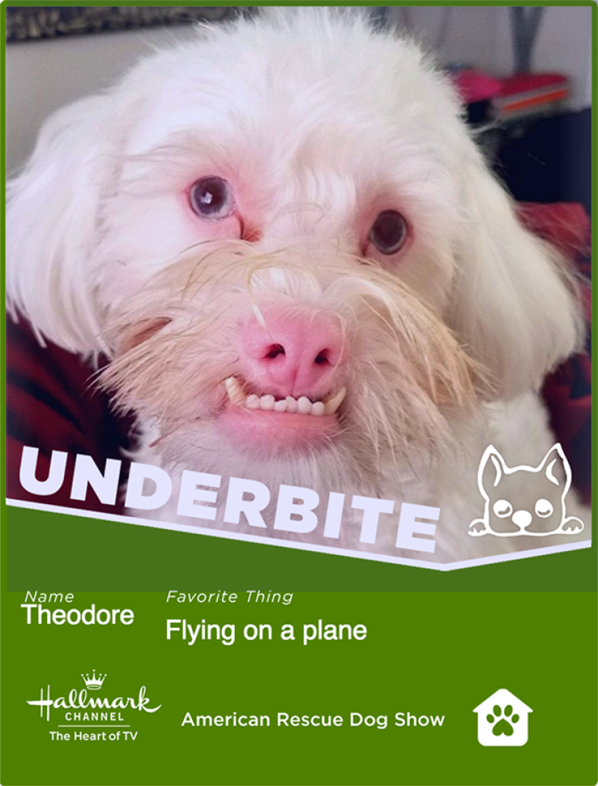 Theodore-underbite.png