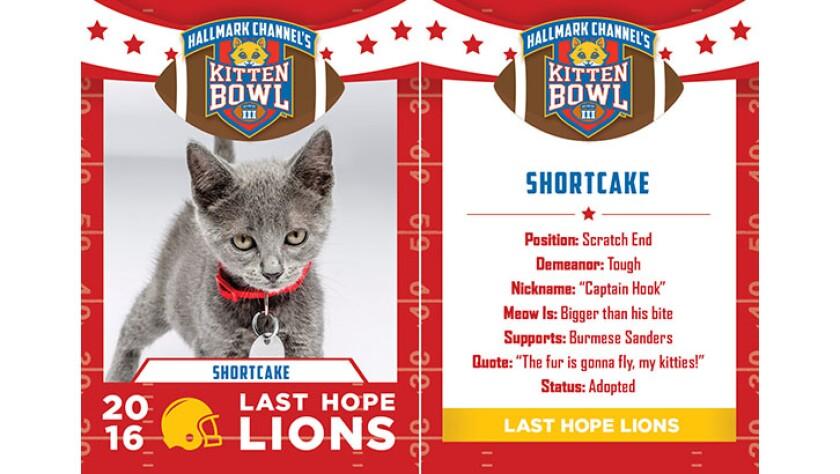 Shortcake-lions-KBIII.jpg