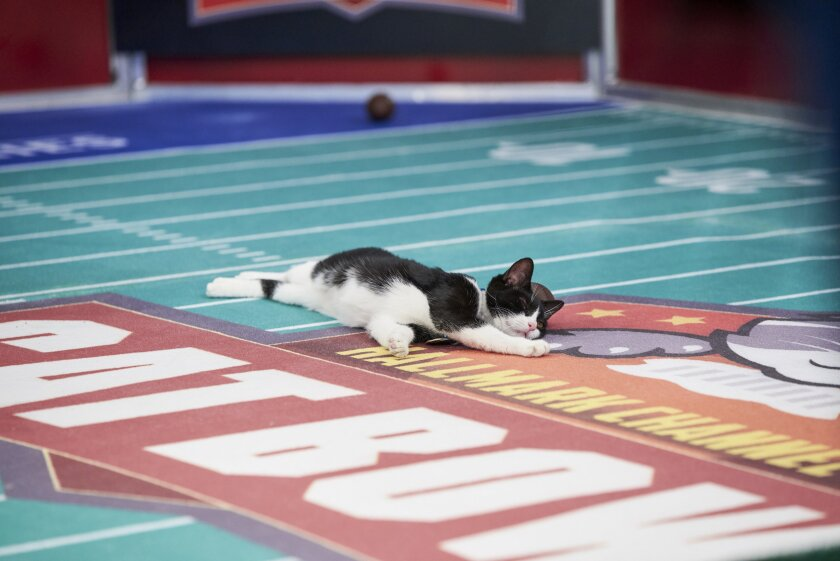 Photos from Cat Bowl - 1