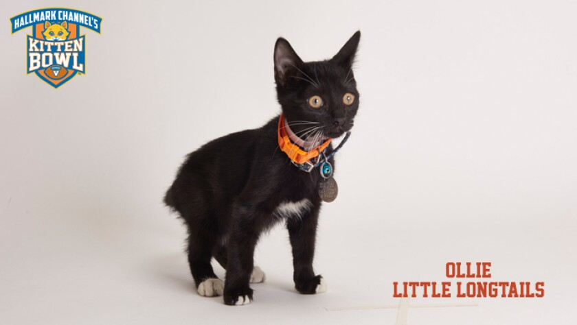meet-the-kittens-KBV-LL-Ollie.jpg