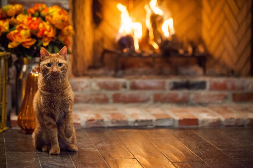 """Photos from """"Happy Yule Log"""" - 7"""