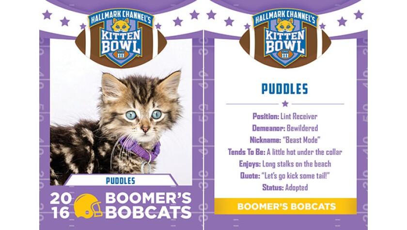 Puddles-bobcats-KBIII.jpg