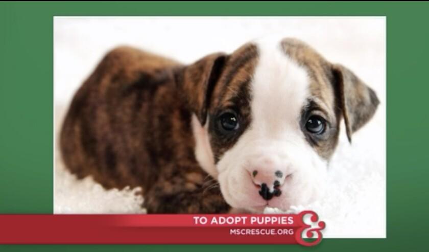9066_Pet_Adoption_Puppies.jpg