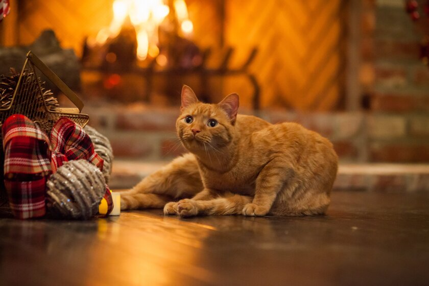 Photos from A Very Happy Yule Log - 3