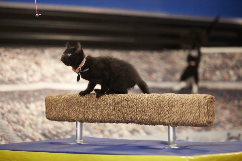 KittenSummerGames_0121.jpg