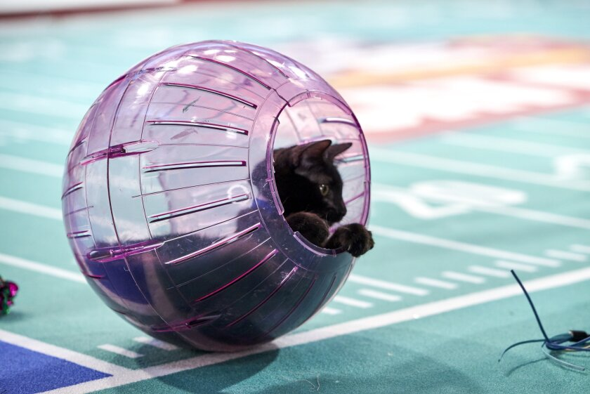 Photos from Cat Bowl - 14