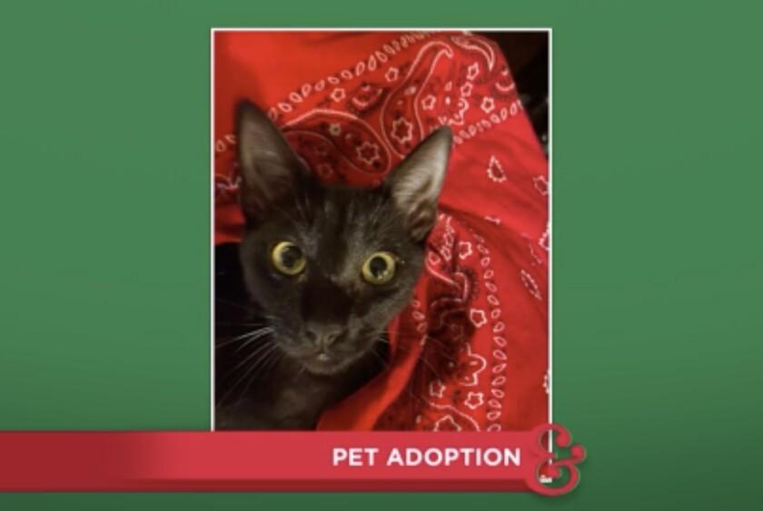 9065_Pet_Adoptin_Tanzi.jpg