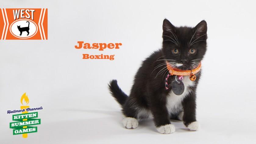 KittenSummerGames_726x410_Jasper.jpg