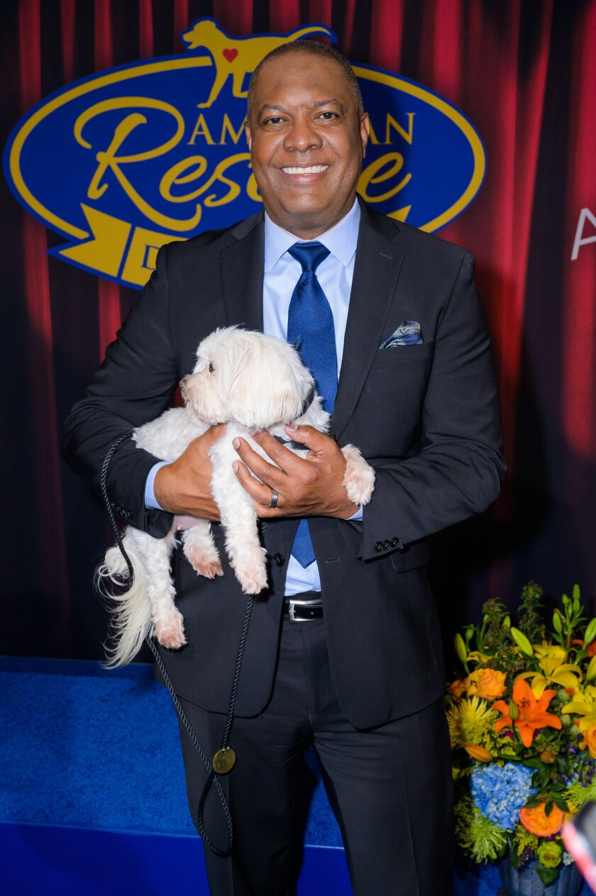 Photos from 2020 American Rescue Dog Show - 3