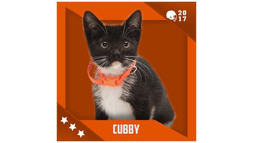 Kitten Bowl IV Emojis - Home & Family Felines - Cubby
