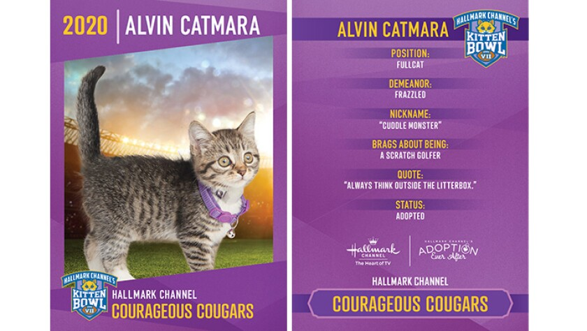 CC-Alvin-Catmara.jpg