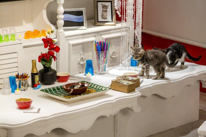 KittenBowl3_2071.jpg