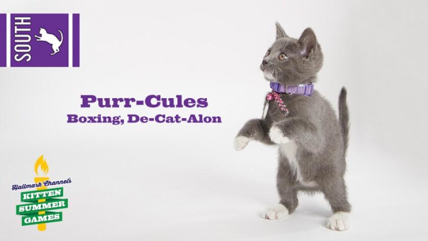 KittenSummerGames_726x410_Purr-Cules.jpg