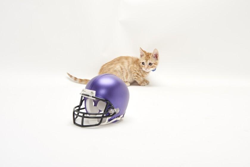 Kitten Bowl Football - 1