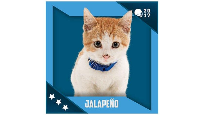 Kitten Bowl IV Emojis - North Shore Bengals - Jalapeno
