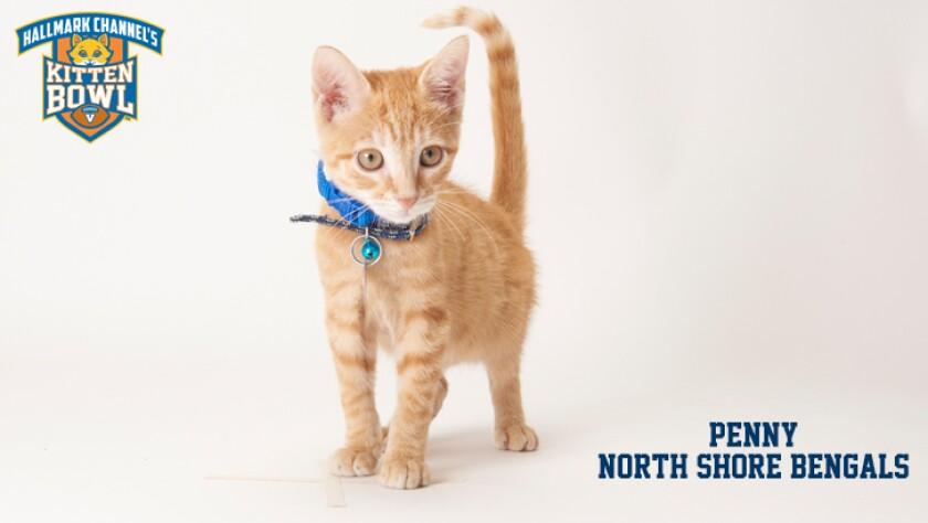 meet-the-kittens-KBV-NSB-Penny.jpg