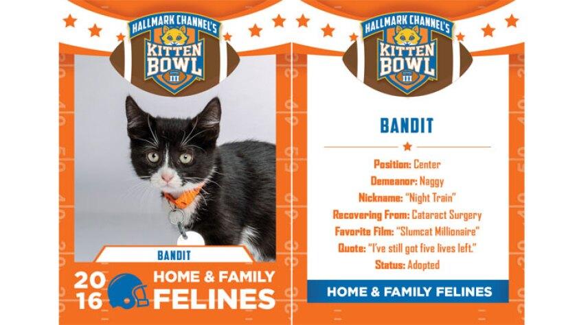 bandit-felines-KBIII.jpg
