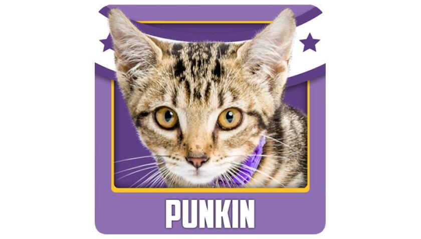 Emojis-KBIII-Bobcats-Punkin.jpg