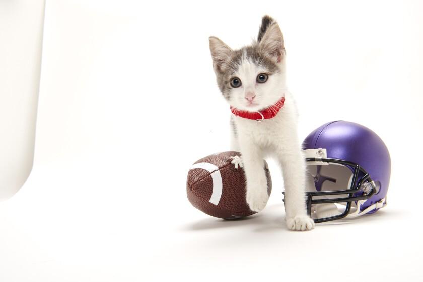 Kitten Bowl Football - 5