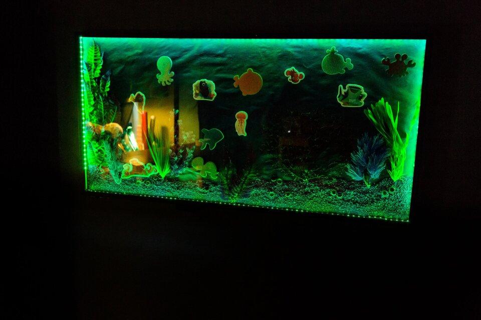 Dory Aquarium