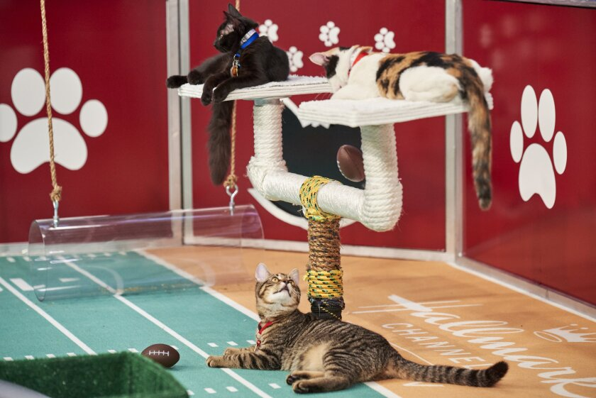 Photos from Cat Bowl - 9