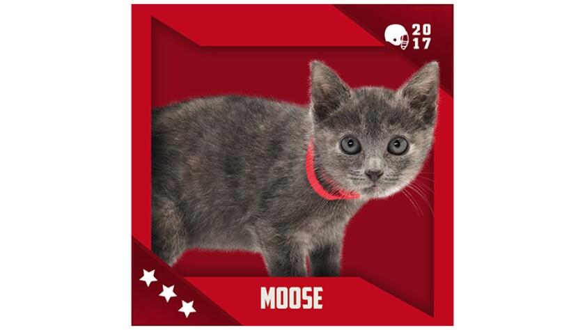 Kitten Bowl IV Emojis - Boomer's Bobcats - Moose