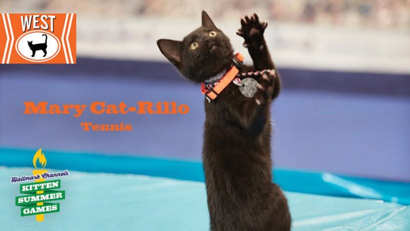 KittenSummerGames_726x410_MaryCat-Rillo.jpg
