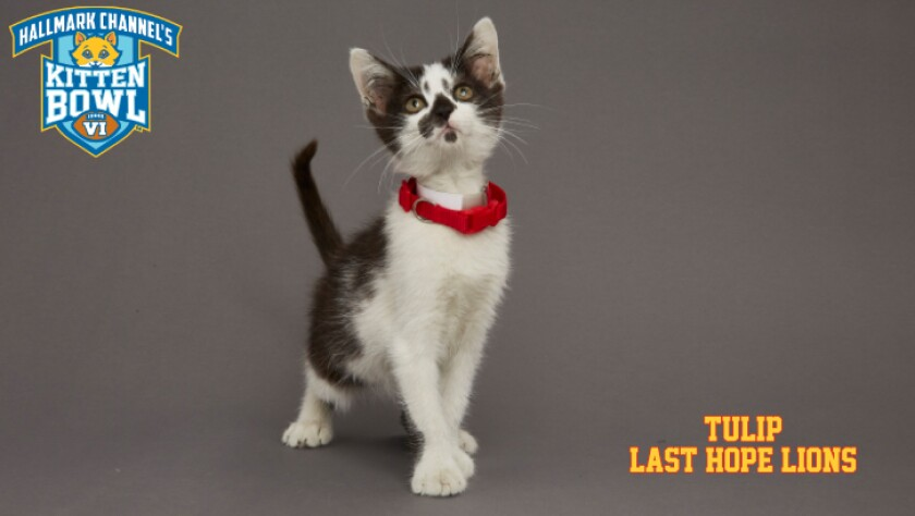 LHL-TULIP-meet-the-kittens-KBV.jpg