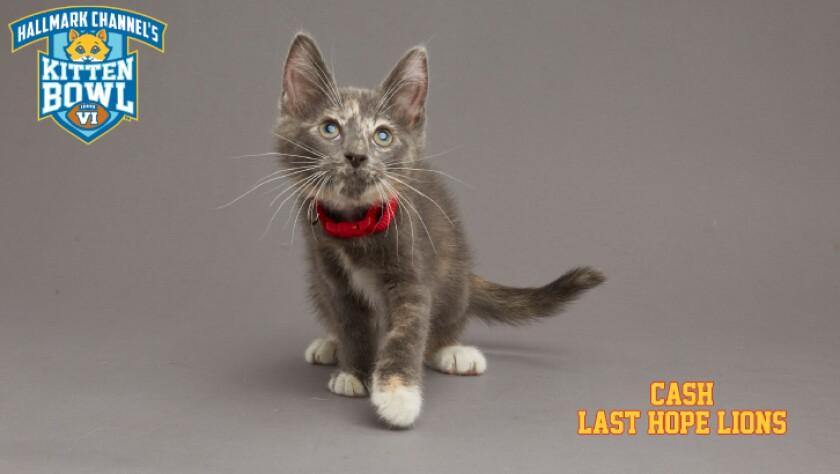 LHL-CASH-meet-the-kittens-KBV.jpg