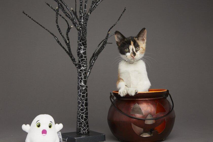Kitten Bowl VI: Fall Kittens - 6