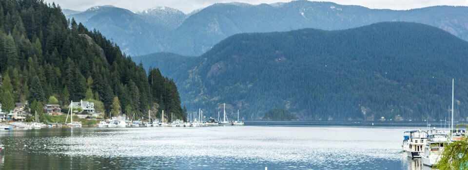 Cedar-Cove-Blog-Header-960x350-image-only.jpg