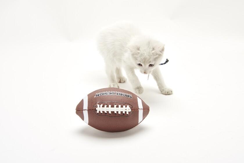 Kitten Bowl Football - 3