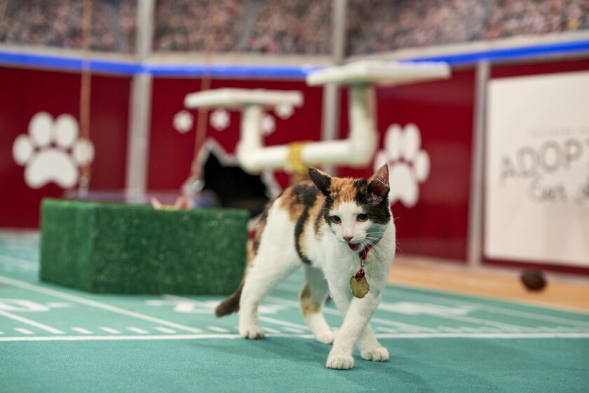 Photos from Cat Bowl - 4