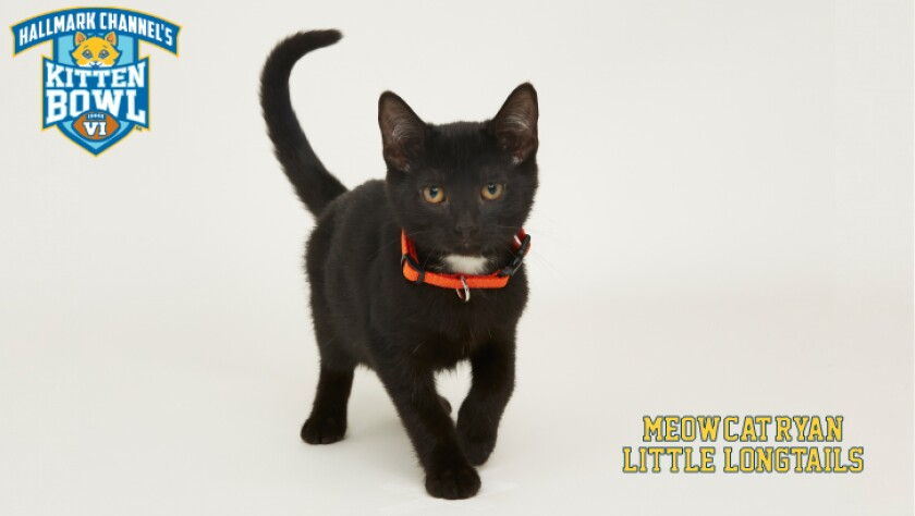 LL-Meow-Cat-Ryan-meet-the-kittens-KBV.jpg