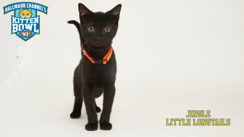 LL-JINGLE-meet-the-kittens-KBV.jpg