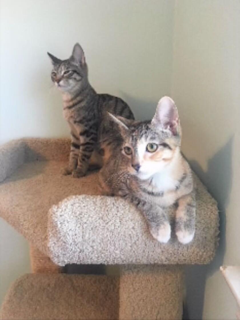 Adoption-HF7225-Callie&Victoria.jpg