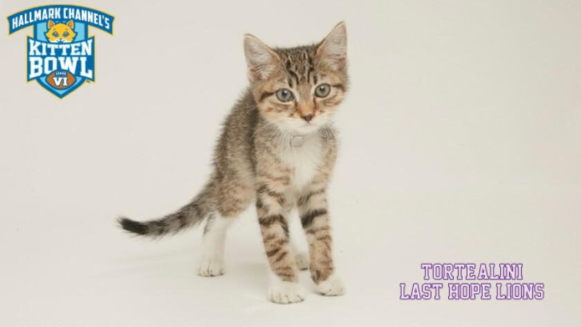 PP-Torte-alini-meet-the-kittens-KBVI.jpg