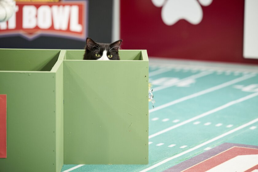 Photos from Cat Bowl - 3