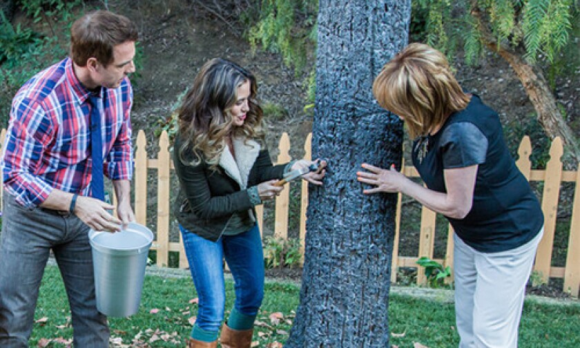 hf-ep2077-segment-maple-tree-tapping.jpg