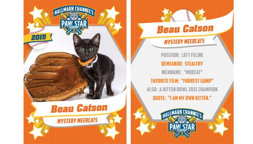 paw-star-beau-catson-2015
