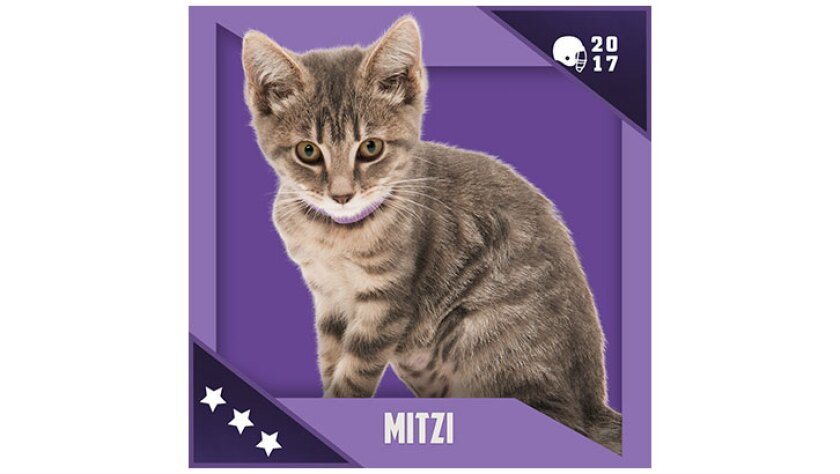 Kitten Bowl IV Emojis - North Shore Bengals - Mitzi